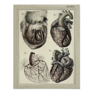 Vintage 1831 Heart Arteries Anatomy Print