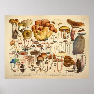 Vintage 1831 Mushroom Variety Brown Blue Print