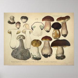 Vintage 1831 Mushroom Variety Brown Cap Print