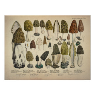 Vintage 1831 Mushroom Variety Green Brown Print