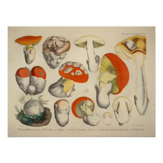 Vintage 1831 Mushroom Variety Orange Yellow Print