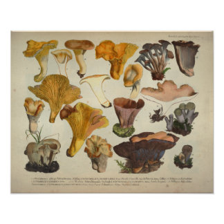Vintage 1831 Mushroom Variety Yellow Brown Print