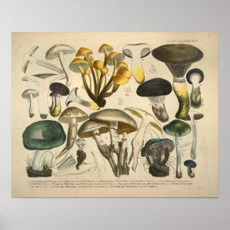 Vintage 1831 Mushroom Variety Yellow Green Print