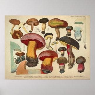 Vintage 1831 Mushroom Variety Yellow Red Print