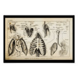 Vintage 1844 Human Heart Anatomy Print