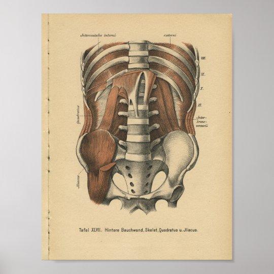 Vintage 1888 German Anatomy Print Abdomen Pelvis