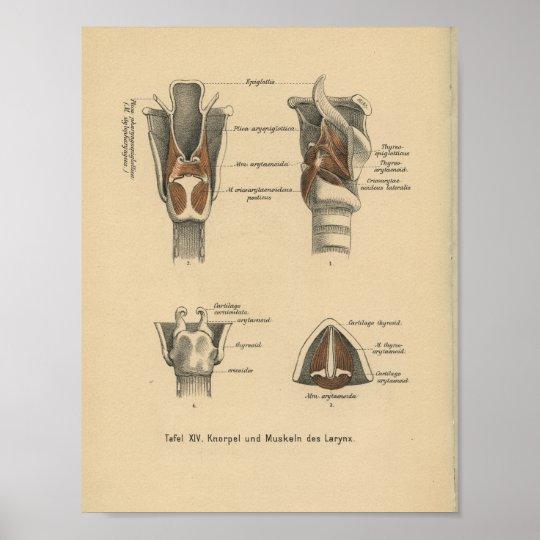 Vintage 1888 German Anatomy Print Larynx