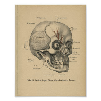 Vintage 1888 German Anatomy Print Skull Eyes