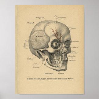 Vintage 1888 German Anatomy Print Skull Eyes