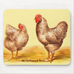 Vintage 1895 BARRED PLYMOUTH ROCK CHICKENS Image Mousepads