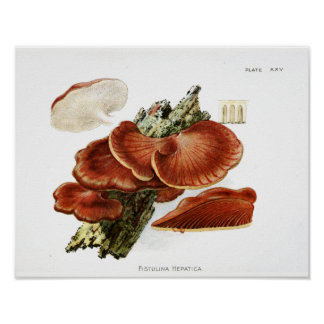 Vintage 1895 Mushrooms Brown Tree Fungus Art Print