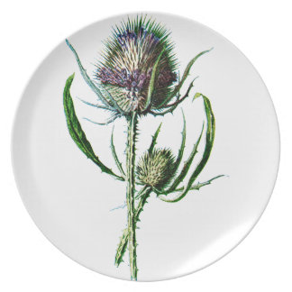 Vintage 1902 Scottish Thistle Antique Wild Flower Dinner Plates