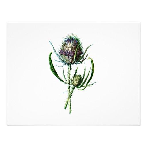 Vintage 1902 Scottish Thistle Antique Wild Flower Personalized Announcements