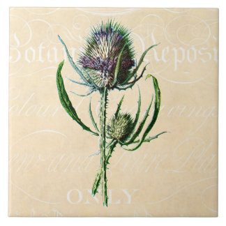 Vintage 1902 Scottish Thistle Antique Wildflower Large Square Tile