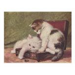 Vintage 1907 Illustration of Kittens Playing