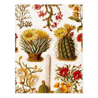 Vintage 1911 Cactus Flower Old Floral Illustration Postcard