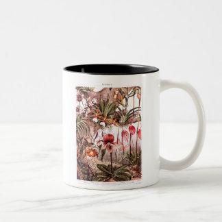 Vintage 1911 Orchid Flower Variety Illustration Coffee Mug