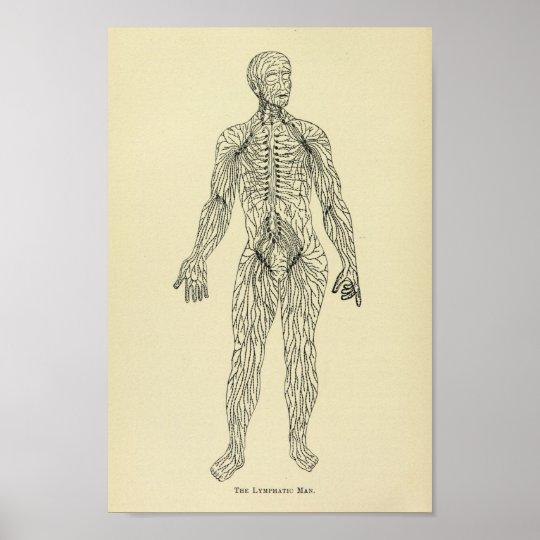 Vintage 1920 Lymphatic System Anatomy Art Print Zazzle