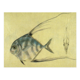Vintage African Pompano Fish, Threadfin Trevally Postcard