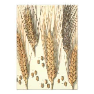 Vintage Agriculture Drought Resistant Wheat Plant Personalized Invitations
