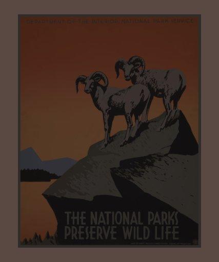 Vintage America National Parks Preserve Wildlife Shirt