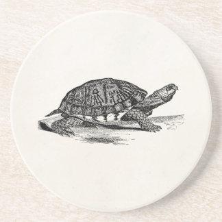 Vintage American Box Tortoise - Turtle Template Coaster