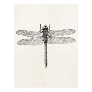 Vintage American Dragonfly Dragon Fly Template Postcard