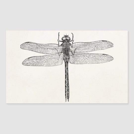 Vintage American Dragonfly Dragon Fly Template Rectangular Sticker