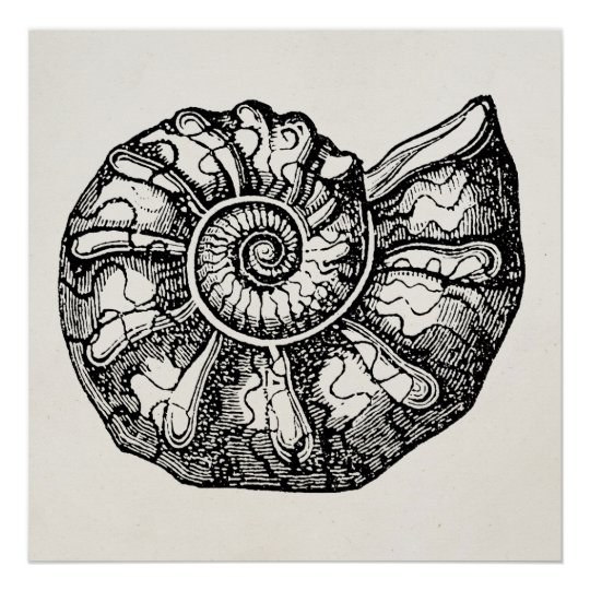 Vintage Ammonite Seashell Fossil Shell Template Poster