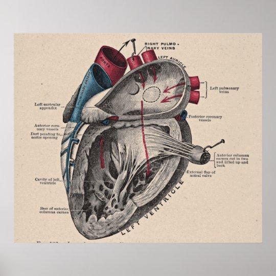 Vintage Anatomical Heart Diagram Poster | Zazzle.co.uk