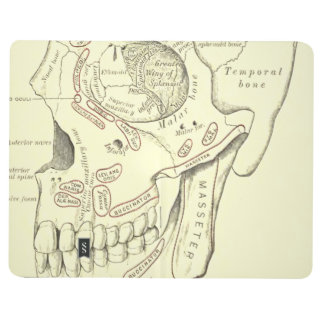 Vintage Anatomy Anterolateral region of the skull Journal
