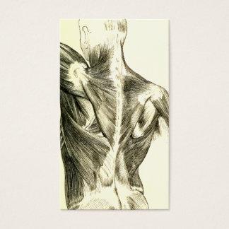 Vintage Anatomy   Back Muscles (circa 1852)