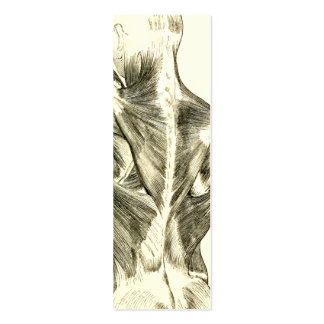 Vintage Anatomy | Back Muscles (circa 1852) Pack Of Skinny Business Cards