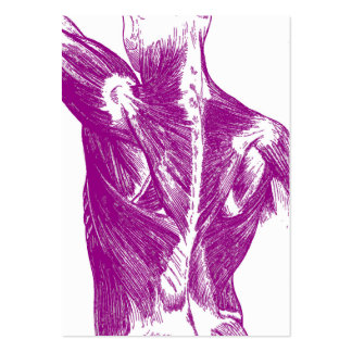 Vintage Anatomy | Back Muscles | Purple Pack Of Chubby Business Cards