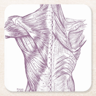 Vintage Anatomy Drawing Back Muscles Purple Square Paper Coaster