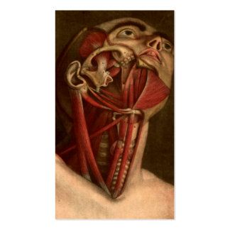 Vintage Anatomy | Head and Neck Pack Of Standard Business Cards