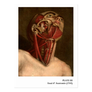 Vintage Anatomy | Head and Neck Postcard