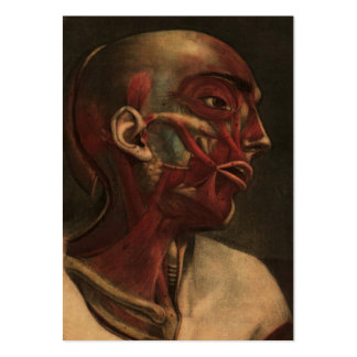 Vintage Anatomy | Head, Neck, and Shoulders Pack Of Chubby Business Cards