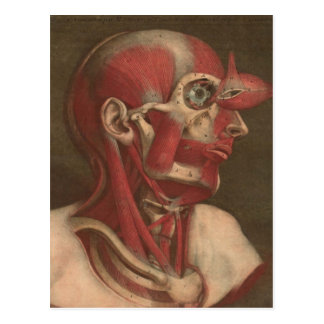 Vintage Anatomy | Head, Neck, and Shoulders Postcard
