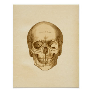 Vintage Anatomy Illustration of Skull Poster