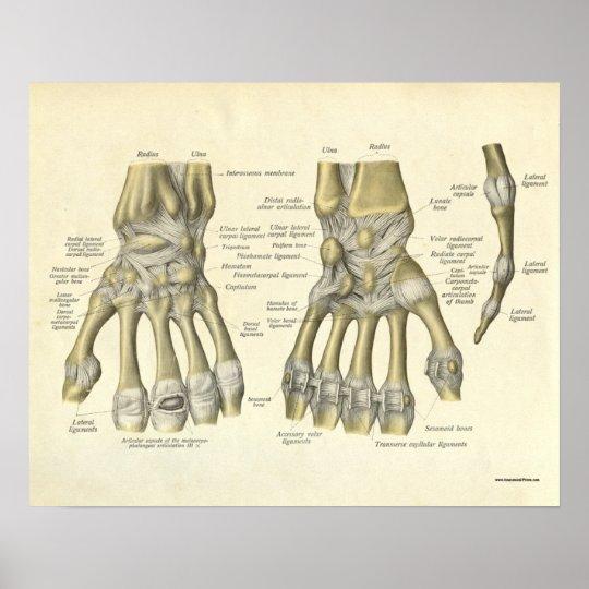 Vintage Anatomy Print Bones of Hand Wrist