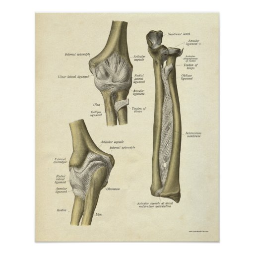 Vintage Anatomy Print Elbow Joint