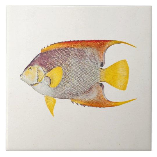 Vintage Angel Fish Antique Hawaiian Print Template Large Square Tile