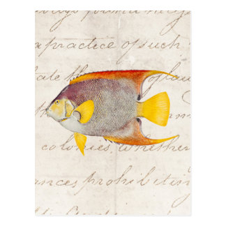 Vintage Angel Fish Antique Hawaiian Print Template Postcard