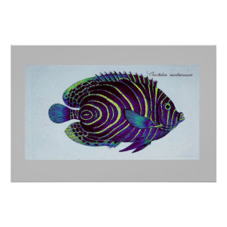 vintage angelfish print