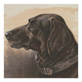 Vintage Animal Label - Labrador Dog Poster