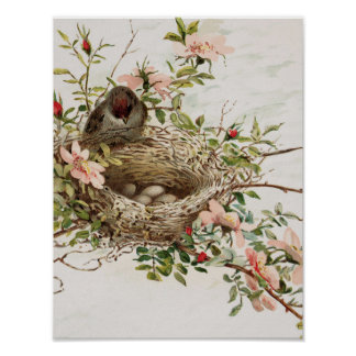 Vintage Animal Poster - Bird in Nest