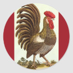 Vintage Animals, Proud Rooster, Backyard Chickens Classic Round Sticker
