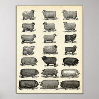 Vintage Antique Farm Animals Print