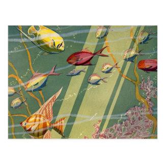 Vintage Antique Fish Undersea Ocean Sea Colorful Postcard